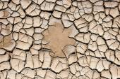 Ground cracked by the drought — Stock Photo