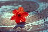 Red Vintage Flower — Stock Photo