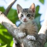 Adorable cat kitten — Stock Photo #71189501