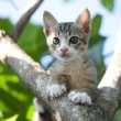 Adorable cat kitten — Stock Photo #71189501