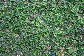 绿色的树叶纹理背景 — 图库照片