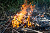 Firewood and flame — Foto de Stock