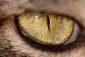 Cat eye — Stock Photo