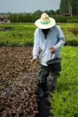 Farmer using fertilizer — Stock Photo