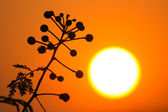 Silhouette flower in sunset time — Stock Photo