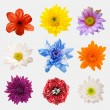 Arrangement flower on wooden with empty space background — Stock Photo #72918397