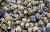 Tayland sahil üzerinde toplanan deniz kabukları — Stok fotoğraf