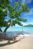 Trees near the beach — Stock Photo
