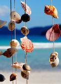 Sea shells on the sea shore — Stock Photo