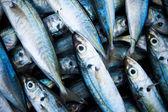 Fish caught — Stock Photo