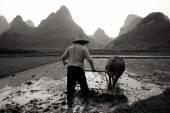 Man is ploughing rice paddy, Guangxi — Stock Photo