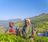 Two tea pickers smile — Stock Photo