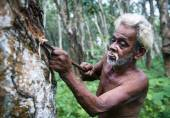 Sri Lankan man tapping rubber tree — Foto Stock
