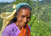 Tea picker smiling — Stock Photo