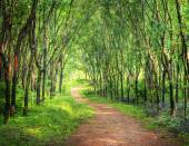 Enchanting Forest Lane — Stock Photo