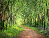 Enchanting Forest Lane — Stock Photo