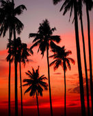 Sunset on tropical Island. — Stock Photo
