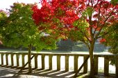 Autumn Trees in Japan — Stock Photo