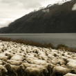 Herd Of Sheeps — Stock Photo #60082711