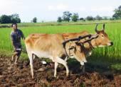 Cambodian local farmer — Stock Photo
