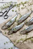 Fresh sardines raw fish with coarse salt and thyme on brown paper on rustic wooden vintage white table — Stock Photo
