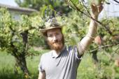 Young bearded boy farmer who gathers peaches from the orchard with straw hat — Stock Photo