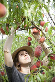 Young farmer woman who gathers peaches from tree — Stock Photo