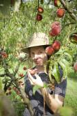 Youngfarmer woman with plait and straw hat who gathers peaches from tree — Stock Photo