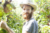 Young bearded smiling boy farmer working on vineyard with straw hat — Stock Photo