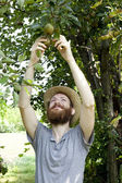 Young bearded smiling boy farmer who gathers pears from trees with straw hat — Stock Photo