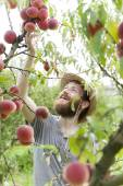 Young bearded smiling boy farmer who gathers peaches from the orchard with straw hat — Stock Photo