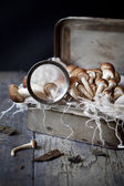 Fresh picked mushrooms on vintage tin box with frayed cloth on rustic table with magnifying glass — Stock Photo