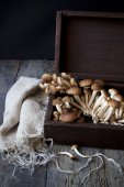 Fresh picked mushrooms on vintage wooden box on rustic table with frayed cloth — Stock Photo