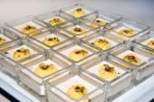 Cake, dessert, mousse, cakes, buffet — Stock Photo