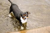 Dog in a park — Stock Photo