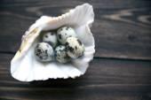 鹌鹑蛋在海洋壳木制的桌子上。选择性软聚焦 — 图库照片
