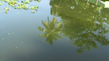 Palm trees reflection on blue water — Stock Video