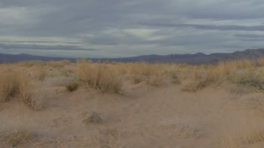 Walking through desert — ストックビデオ