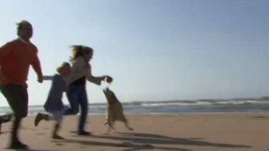Family running hand in hand — ストックビデオ