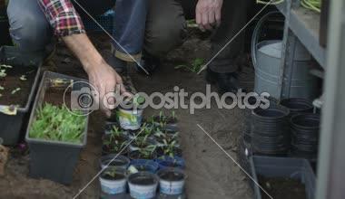 Senior man holding plant pots — Stock Video