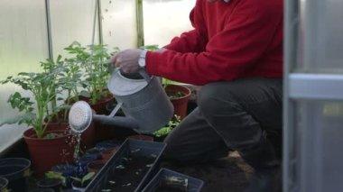 Man planting plants — Stock Video