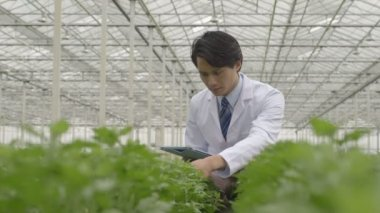 Scientist examining plants — Stock Video