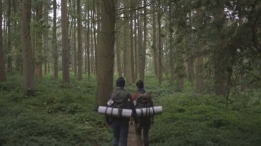 Couple walking in forest — Stock Video
