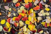 Foliage and wood chips in back yard during fall — Stock Photo
