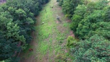 Aerial - Horses in pasture — Stock Video