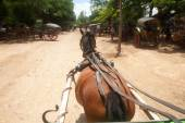 Carriage in Inwa ancient city,Myanmar. — Stockfoto