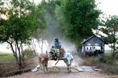 Ox carts journey home everyday in the evening , Myanmar. — Stock Photo