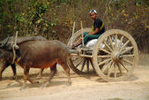 Cart being pulled by buffalo. — Stock Photo