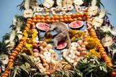 Thailand Monkey Party ( Thailand Monkey Buffet ). — Stock Photo