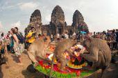 Thailand Monkey party (Thailand Monkey Buffet ). — Stok fotoğraf